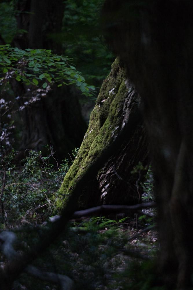 Urwaldbaumweg